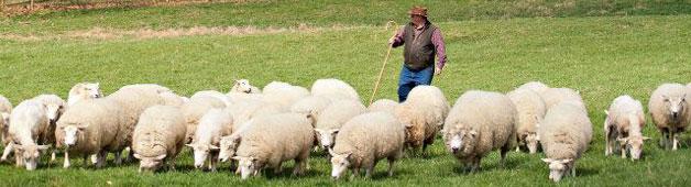 contact-border-springs-lamb-farm
