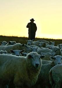shepherd-craig-rogers-3