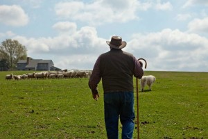 shepherd-craig-rogers-1
